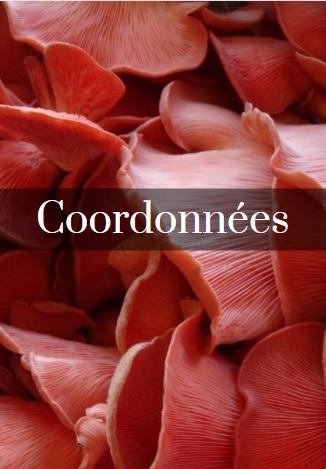 Pleurotes roses_1